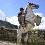 Ushguli horse